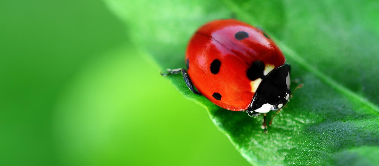 Pest & Disease